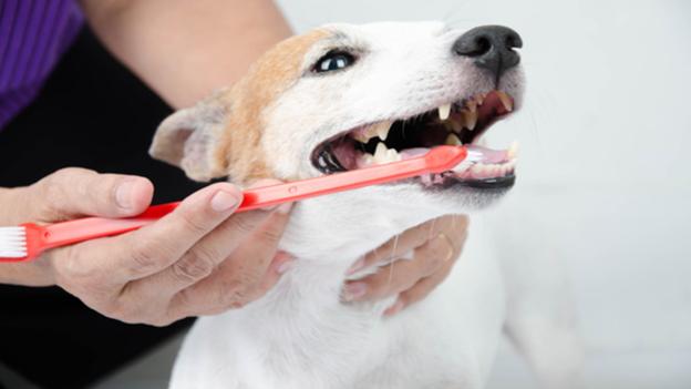dog dental hygiene tips from heartfelt veterinary hospital in portland oregon